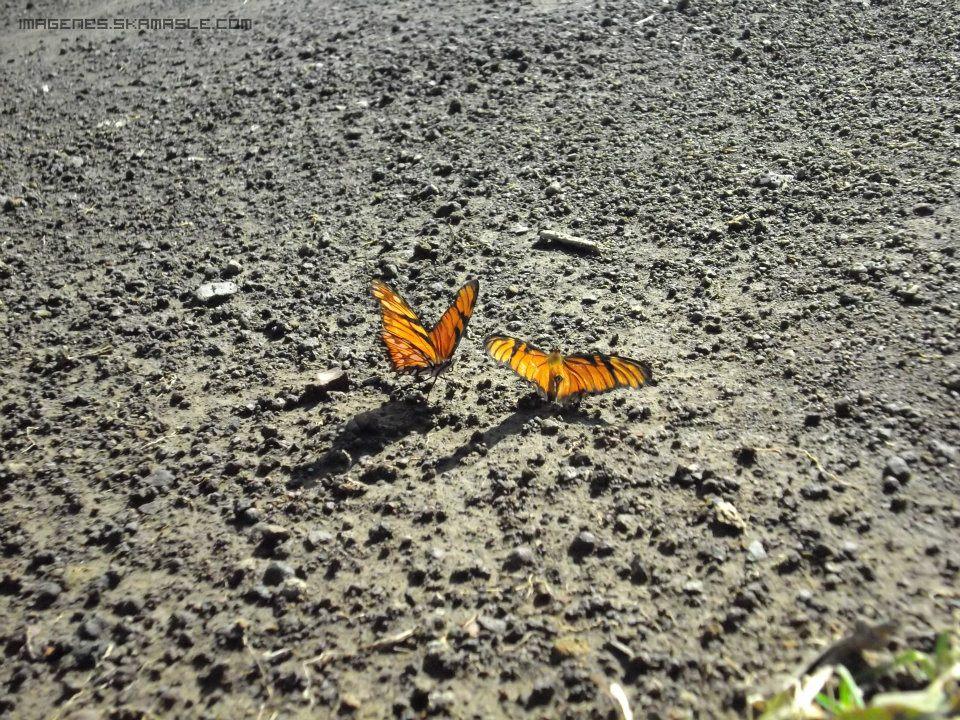 Mariposas Foto