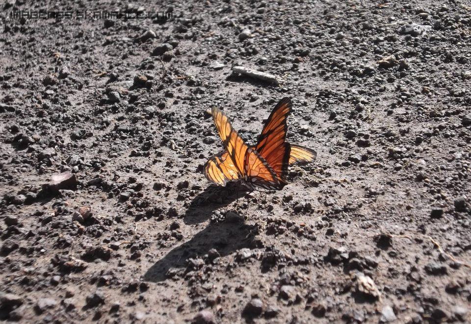 Foto Mariposas en la Tierra