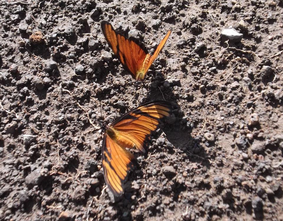 Mariposas en la Tierra