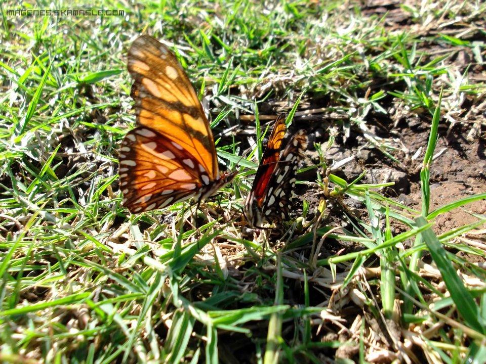 Fotografía Pareja de Mariposas Buena Calidad