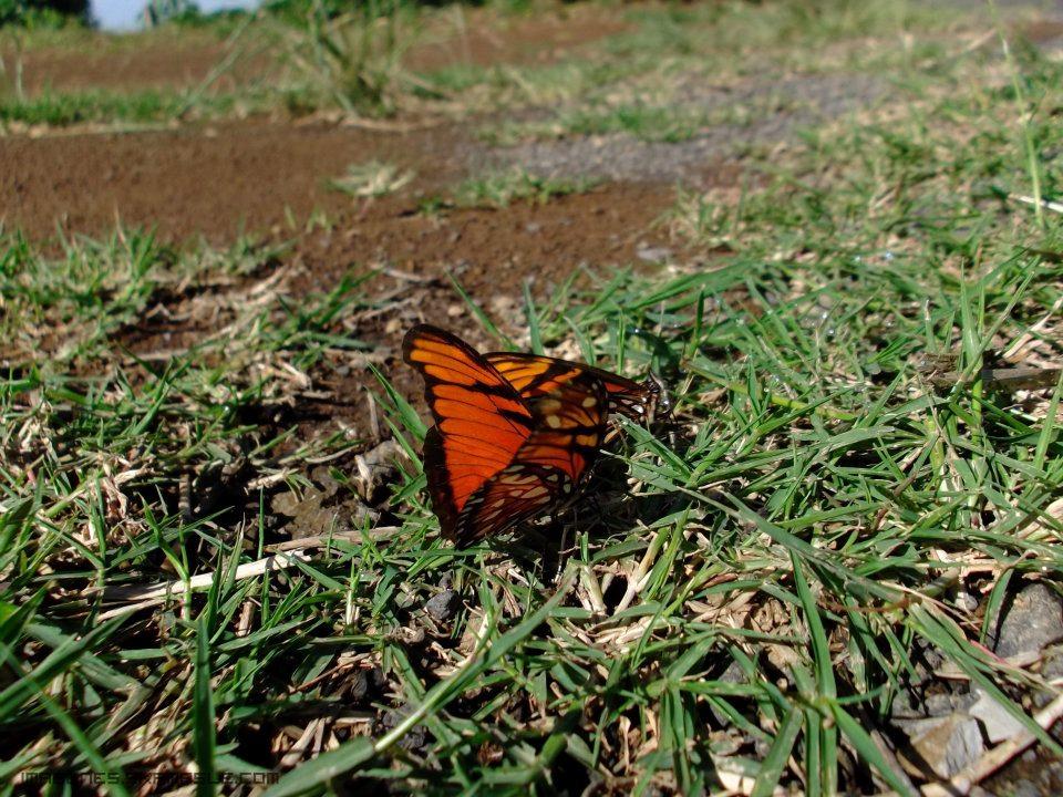 Fotografías Mariposas Alta Resolución