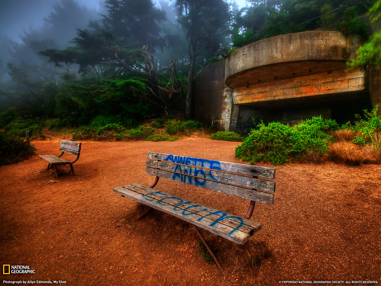 Bosque Neblina