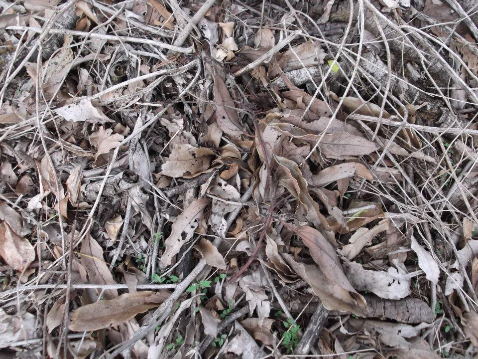 Texturas hojas Secas