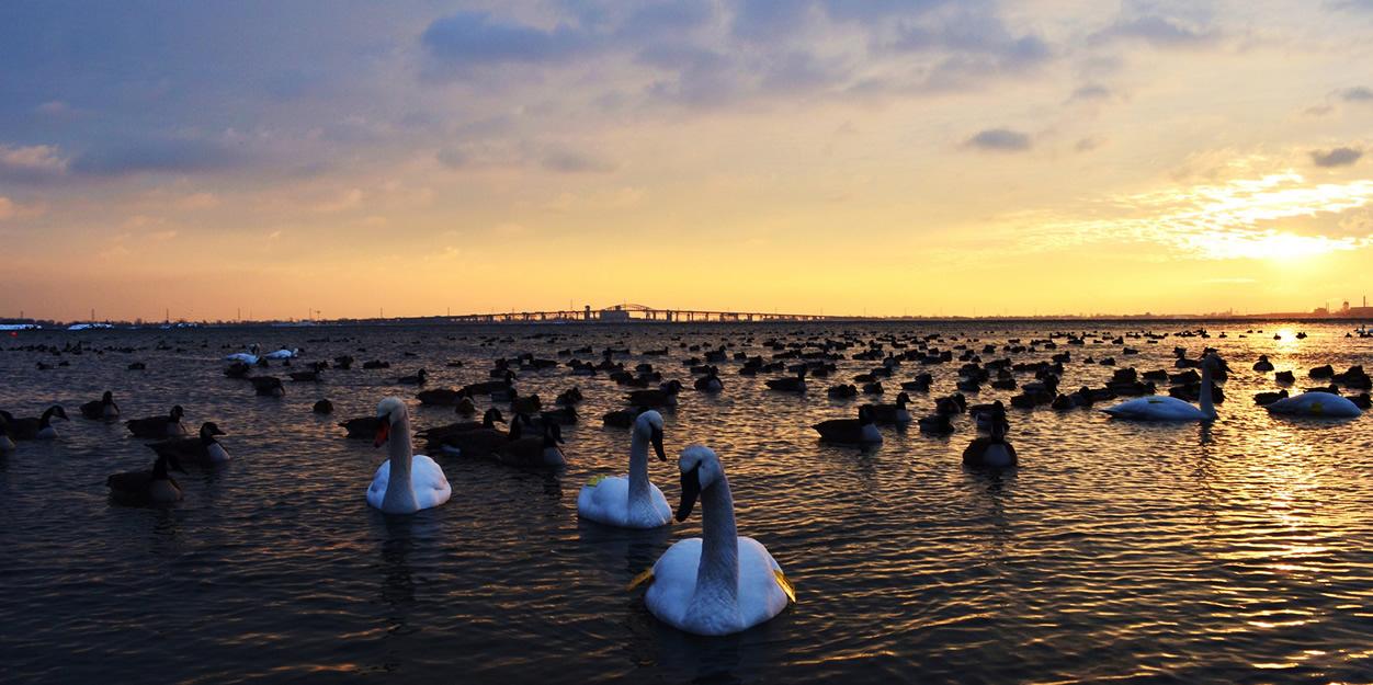 Foto Atardecer con patos